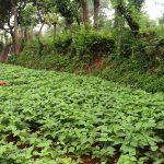 तेमालमा सिप्रेडको कृषि परियोजनाबारे चर्चा